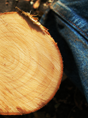 Wood and Jeans