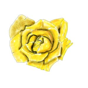 another rose painted