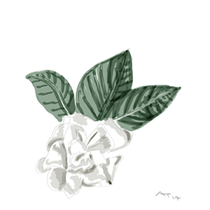 another gardenia flower