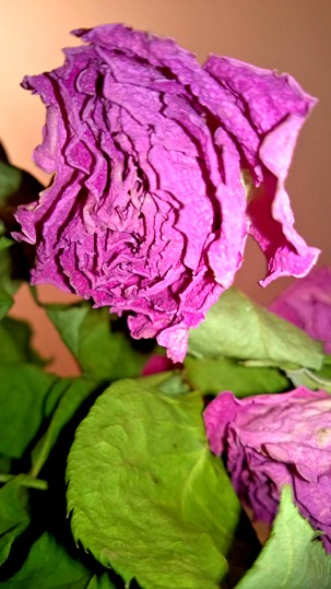 a mystery story around rose the Kandahar