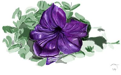 painting petunia in Antwerp