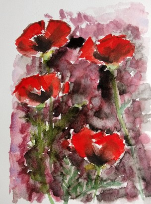 a poppy aquarelle