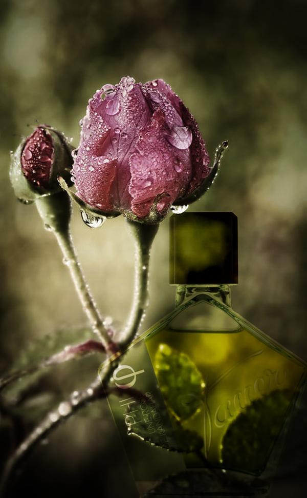 PHI-une rose de Kandahar